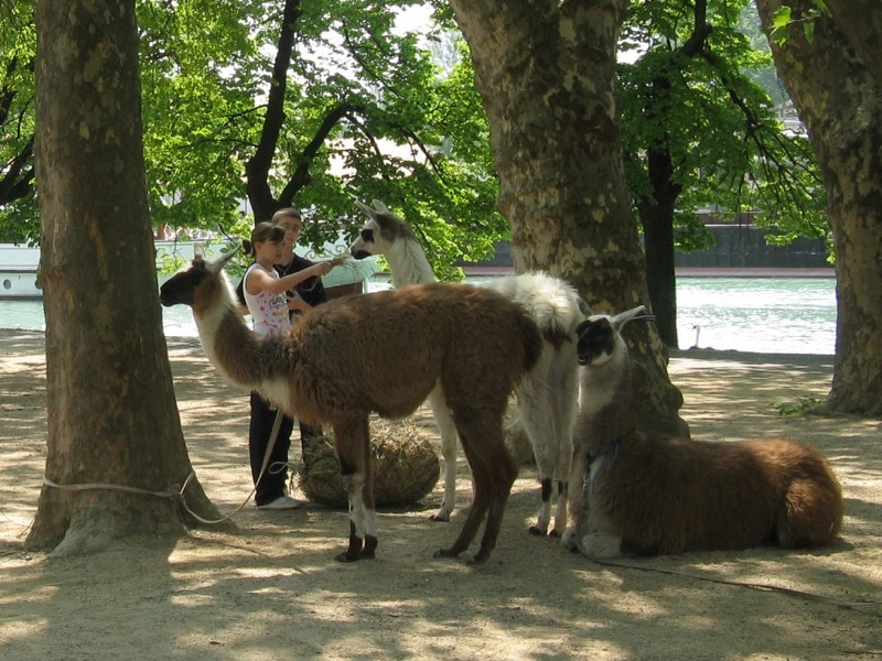Animal park, zoo, petting zoo, horse riding, pony riding, camel, camels, camel riding, bubble football, Big Ball, Zorb, Zorbing, adventure park, Siófok, Balaton, programs